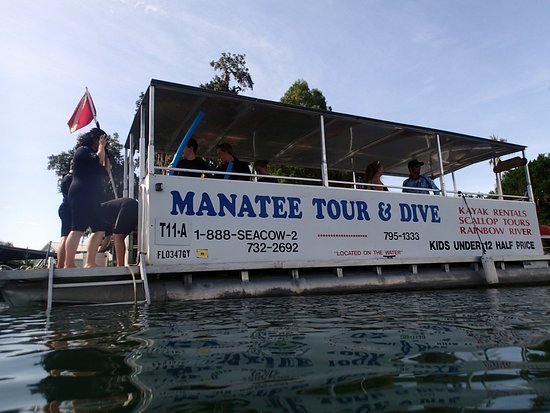 Manatee Tour and Dive: Manatee tour