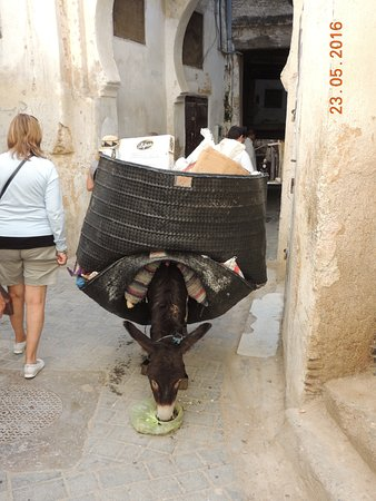 Fondouk Tsetouanien: burros de carga