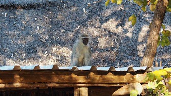 Mashovhela Bush Lodge: photo1.jpg
