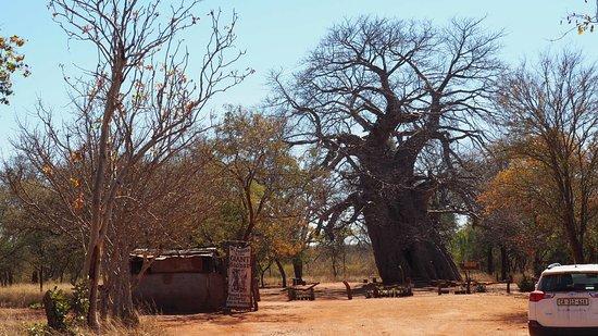 Gravelotte, Sydafrika: Hartstikke leuk om te bezoeken! Jammer dat het niet goed op de vvv folder van de regio staat ver