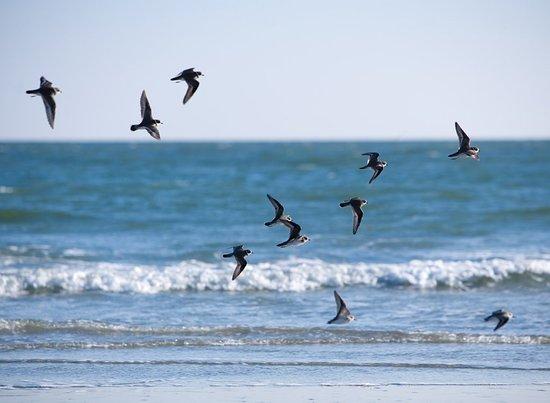 Wild Dunes Resort: Beautiful Scenery