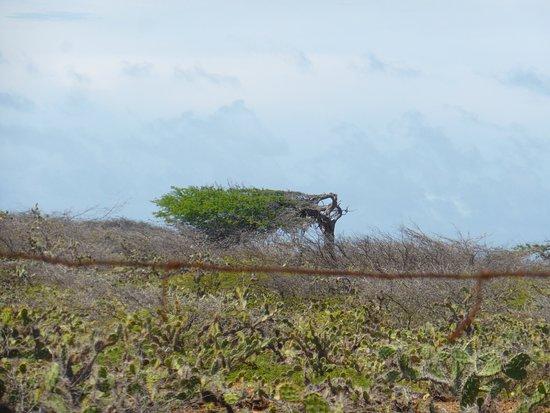 Washington-Slagbaai National Park, Bonaire: photo2.jpg