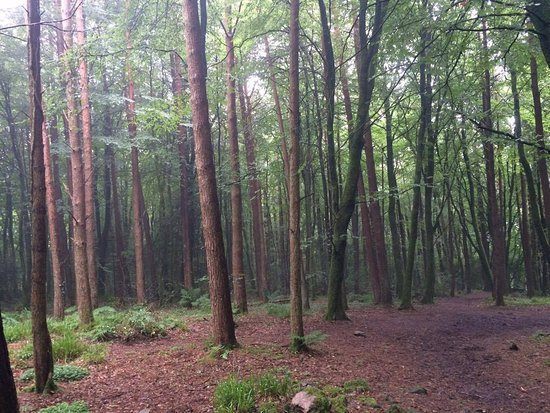 Cratloe, Irlandia: Endless breathtaking forest