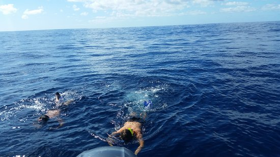 Big Blue: swimming with whales