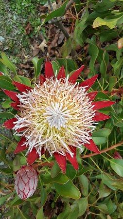 National Rhododendron Gardens照片