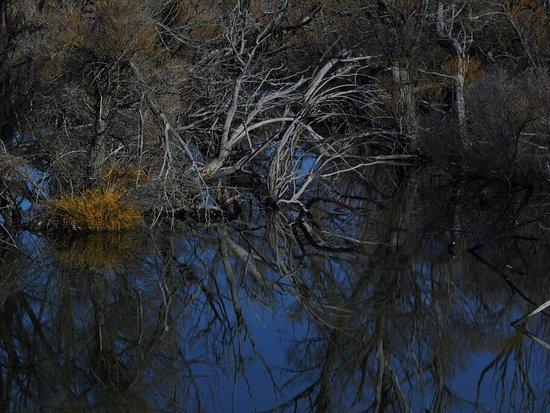 Lake Tekapo: _8020043_large.jpg