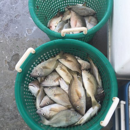 Marathon lady party boat fishing: This was the total catch for the entire boat