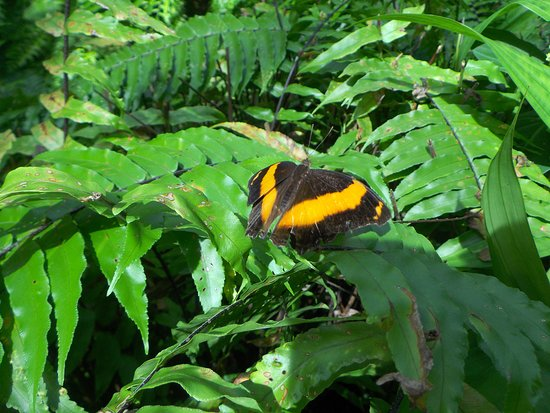 Butterfly Shop Kuranda