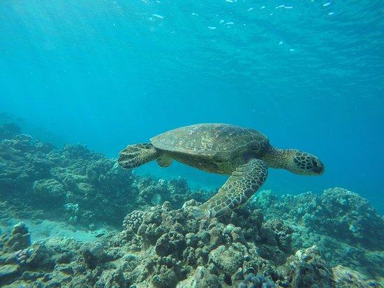 Ewa Beach, HI: Snorkeling at the best spot on the island