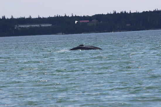 Downeast Charter Boat Tours: whale