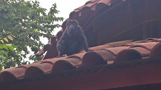 Nuevo Arenal, Costa Rica: Luna Llena... A visit with a friend!