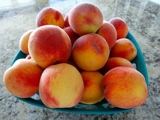 Summerland, Kanada: Just some of the JUICY TASTY peaches we picked at E.P. Orchards.