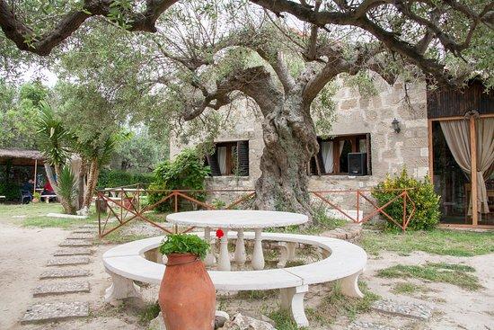 Apollonia: Café auf dem Hügel