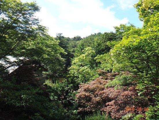Oshino onsen: 2階の梅の間から庭の眺め