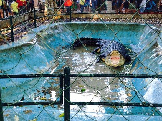 Davao City, Filipiny: Crocodile Pangil