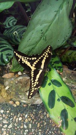 Butterfly Rainforest: 20160804_161714_large.jpg