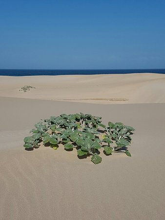 Beachview, Zuid-Afrika: 20160712_113327_large.jpg
