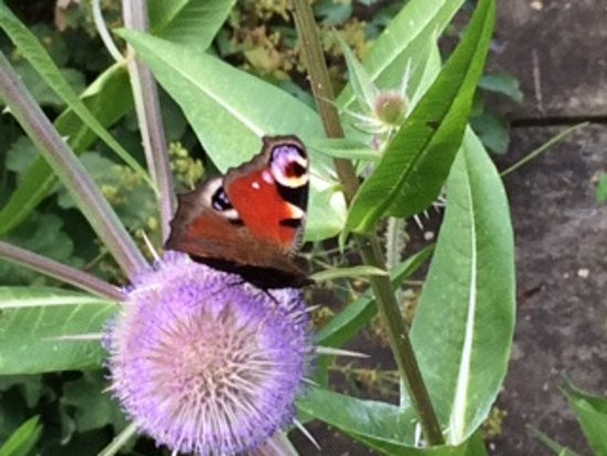 The Manor at Hemingford Grey: One of the many butterflies