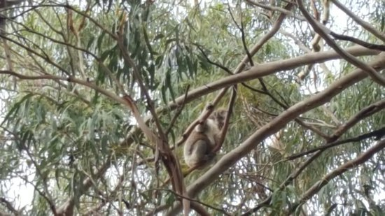 Hanson Bay, ออสเตรเลีย: 20160703_095037_large.jpg