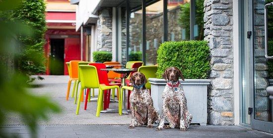 The Ross : The Lane Café Bar