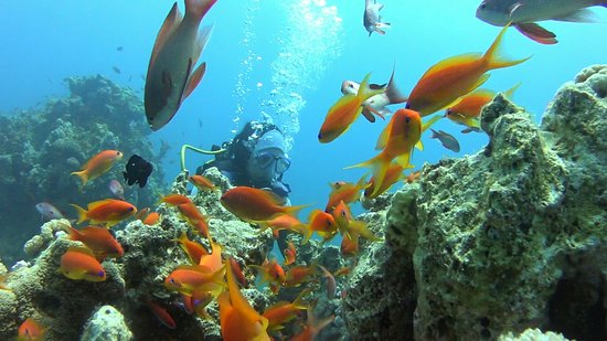 InterContinental Aqaba Resort: SAC-20160803-092656_large.jpg