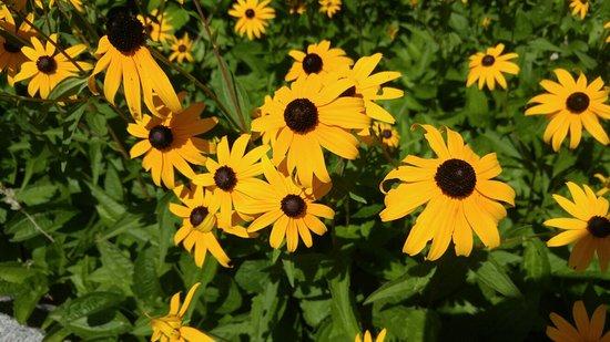 Spohr Gardens: 0803161117a_large.jpg