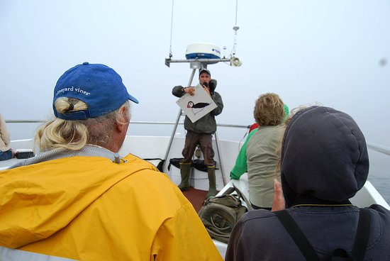 Hardy Boat Cruise: Puffin instruction!