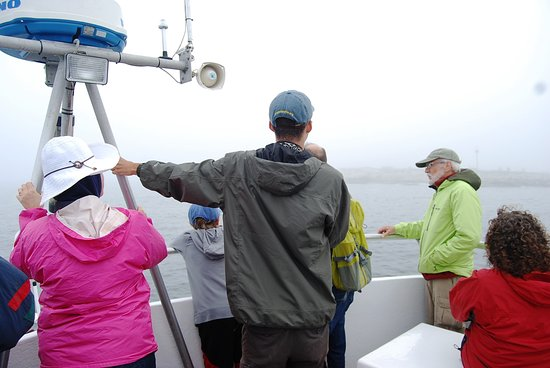Hardy Boat Cruise: Looking for Puffins