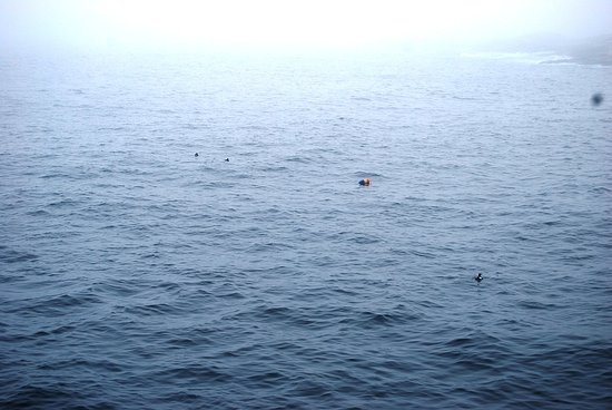 Hardy Boat Cruise: A Puffin is spotted!
