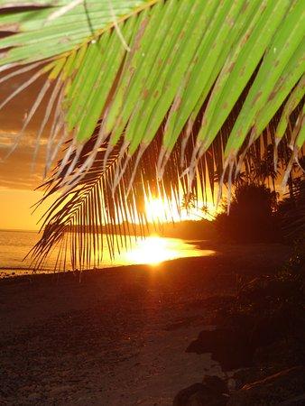 Foto de Palm Grove