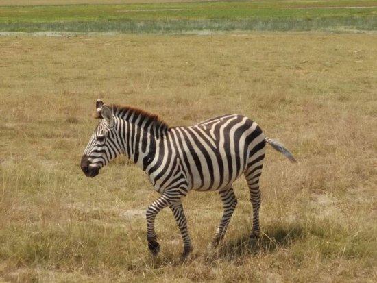 Amboseli National Park: photo6.jpg