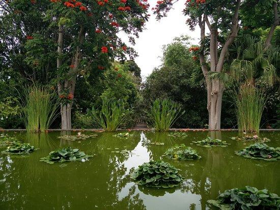 Img 20160730 124844 picture of botanical gardens jardin botanico puerto de la - Botanical garden puerto de la cruz ...