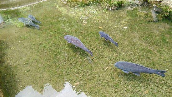 Kotsuki Pond