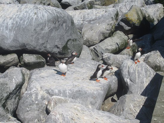 Cutler, ME: You will see an incredible number of puffins as well as other sea birds.