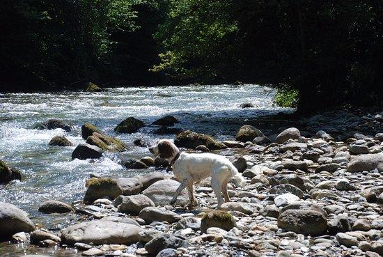 Seix, فرنسا: Moyennant quelques règles , même les chiens sont les bienvenus