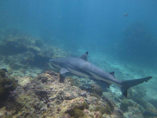 Merlin Divers - Kamala Diving Center: photo0.jpg