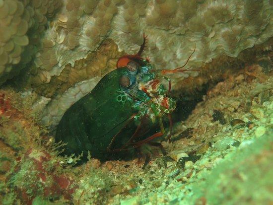 Merlin Divers - Kamala Diving Center: photo1.jpg