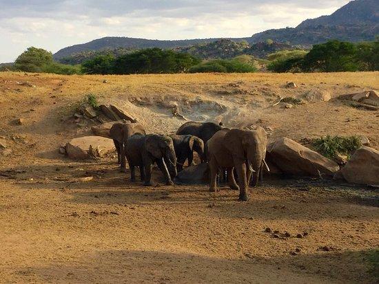 Tsavo, Kenia: photo6.jpg