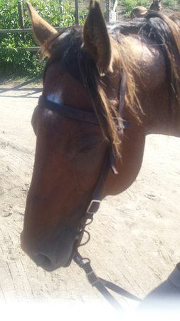 Rustic Rides Farm