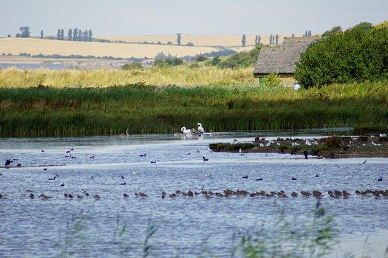 Oare, UK: lake and countryside beyond