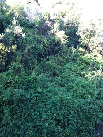Plaza Skiathos Hotel: A wall of trees! The view from our balcony
