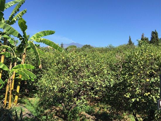 Agriturismo Il Limoneto: photo0.jpg