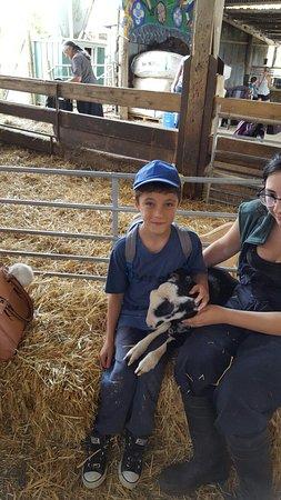 Wethersfield, UK: Boydells Dairy Farm