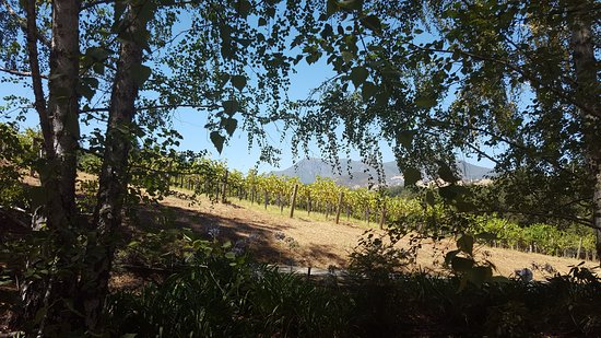 Storybook Mountain Vineyards