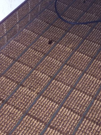 Quality Inn Fort Jackson: found the dead bug under the table