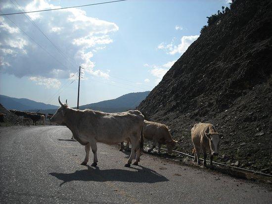 Phthiotis Region Photo