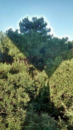 Thure, Γαλλία: La nacelle frôle les arbres - Montgamé