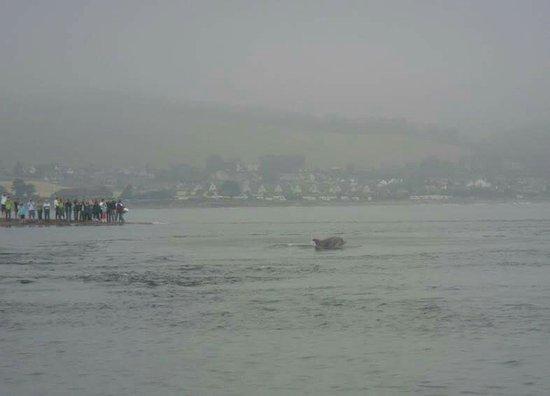 Chanonry Point : FB_IMG_1470437423757_large.jpg