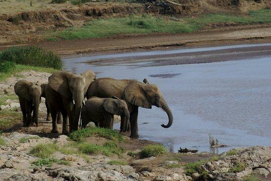 Meru National Park لوحة