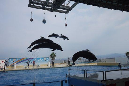 この後、水しぶきが!! - Picture of Marine World umino-nakamichi, Fukuoka - TripAdvisor